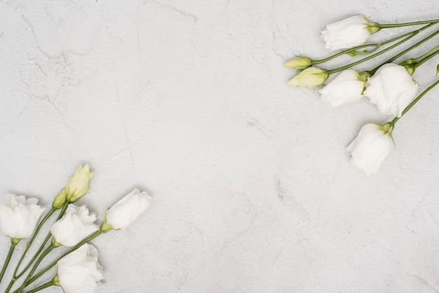 Buquês de vista superior de rosas brancas Foto gratuita