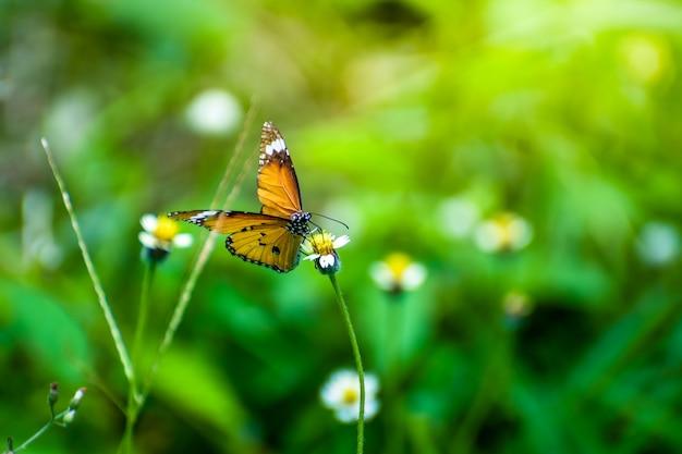 Butterflie com flores e sol pela manhã Foto Premium