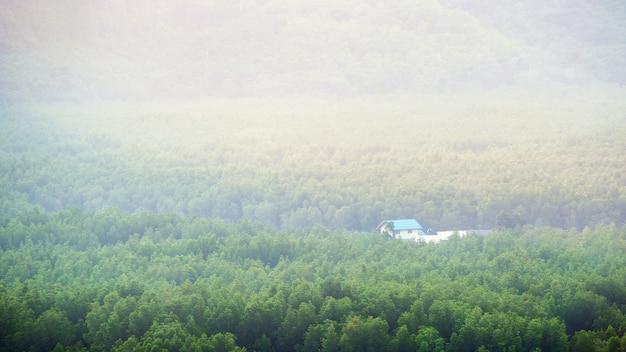 Cabana de madeira na floresta Foto Premium