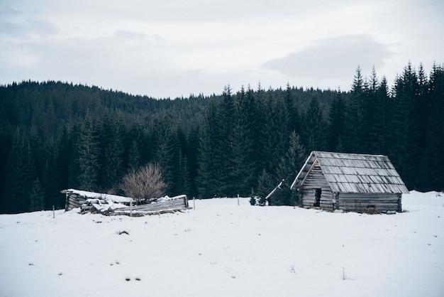 Cabana de madeira no campo coberto de neve Foto gratuita