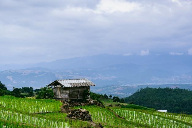 Cabana em arroz fileds em montanhas Foto Premium