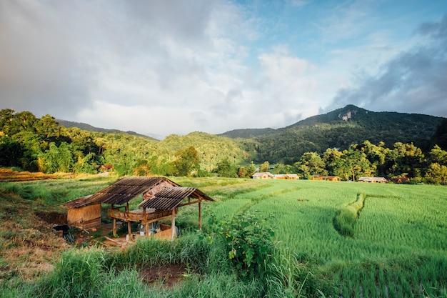 Cabana no campo de arroz na tailândia Foto gratuita