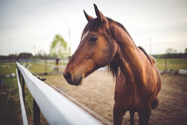Cabeça de cavalo close-up Foto gratuita
