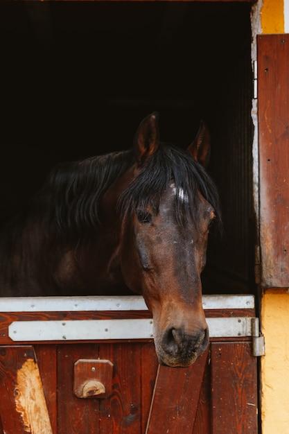 Cabeça de cavalo no estábulo Foto Premium