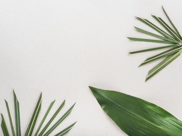 Cacho de folhas de plantas tropicais Foto gratuita