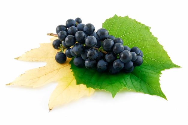Cacho de uvas maduras de azuis com folhas isoladas no fundo branco Foto Premium