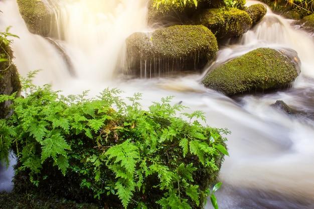 Cachoeira macia com planta verde na estação chuvosa de rocha Foto Premium