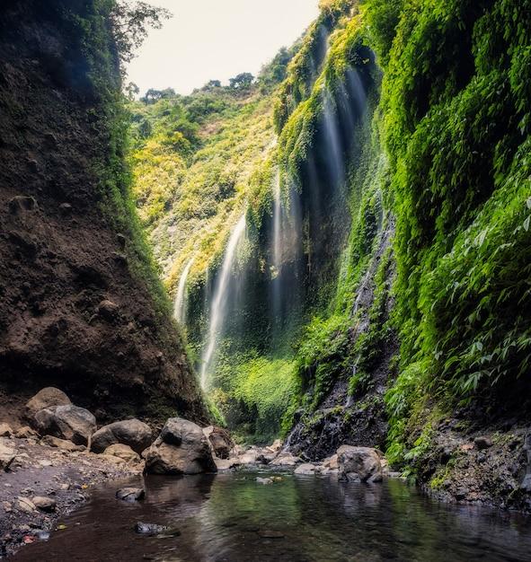 Cachoeira madakaripura linda fluindo no vale verde Foto Premium