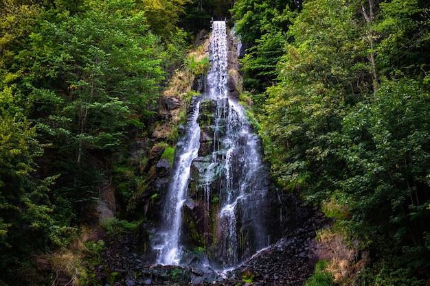 Cachoeira trusetaler fluindo pela floresta na alemanha Foto gratuita