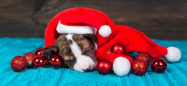 Cachorrinho basenji engraçado com chapéu de papai noel e bolas vermelhas Foto Premium