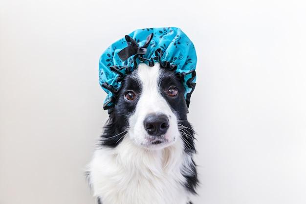 Quando dar banho seco no seu cão