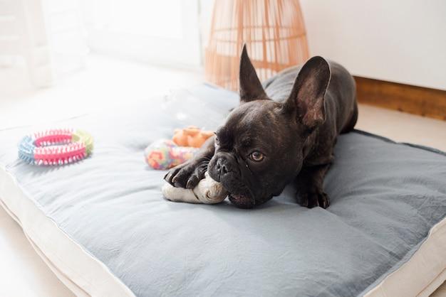 Cachorrinho fofo brincando com seus brinquedos Foto gratuita