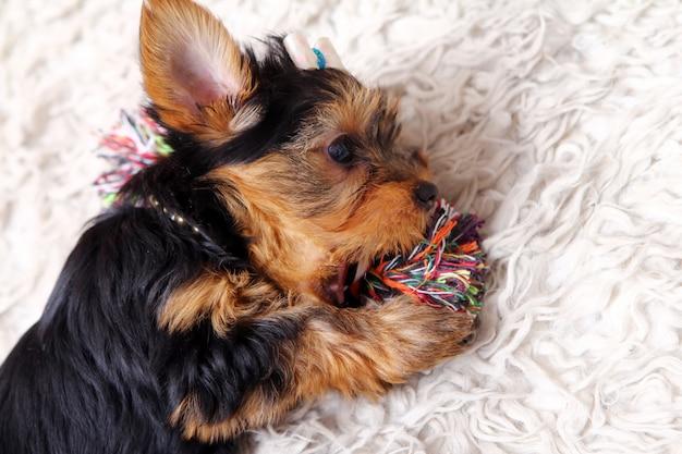 Cachorrinho fofo em casa Foto gratuita