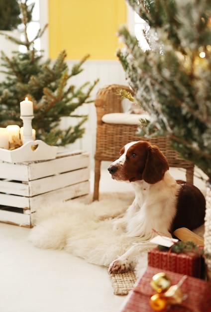 Cachorrinho fofo em uma sala de estar decorada de natal Foto gratuita
