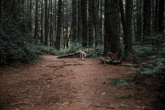 Cachorro andando na estrada de terra na floresta Foto gratuita