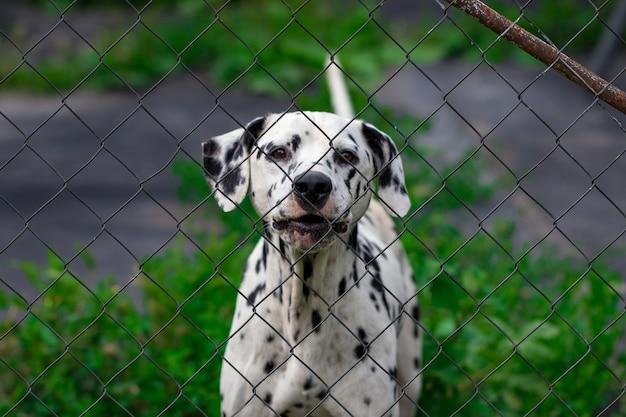 Cachorro atrás da cerca na gaiola. Foto Premium