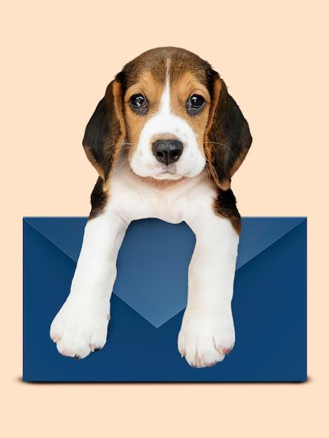 Cachorro beagle adorável com um envelope azul Foto gratuita
