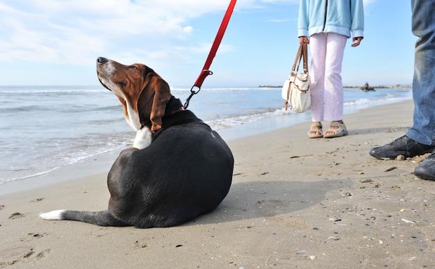 Cachorro se coçando na praia