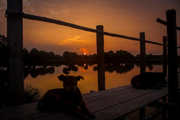 Cachorro de silhueta sunset nature lake Foto gratuita