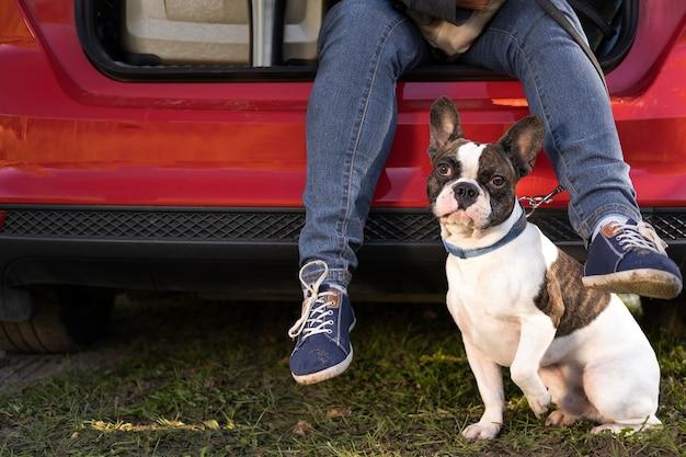 Cachorro de visão frontal sentado ao lado do carro Foto gratuita