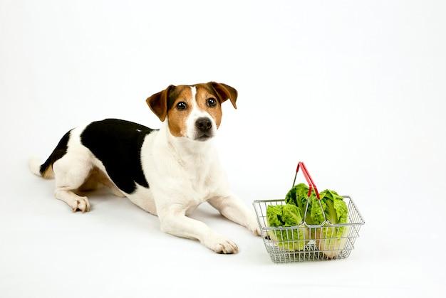 Cachorro deitado com uma cesta com salada Foto Premium