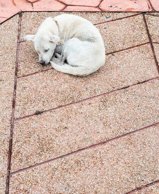 Cachorro doente solitário está dormindo. Foto Premium