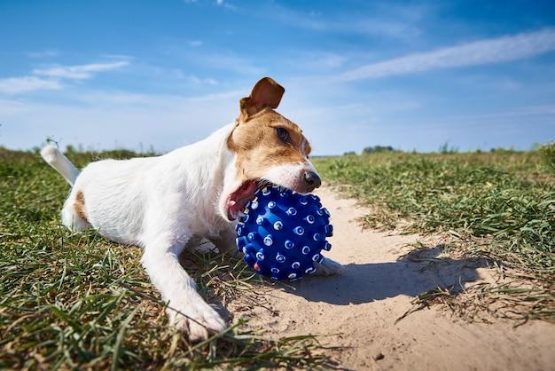 Cachorro feliz brincando com bola no campo em dia de verão Foto Premium