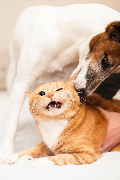 Cachorro fofo brincando com um amigo gato Foto Premium
