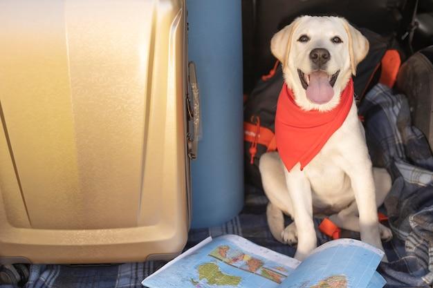 Cachorro fofo com bandana vermelha vista alta Foto gratuita