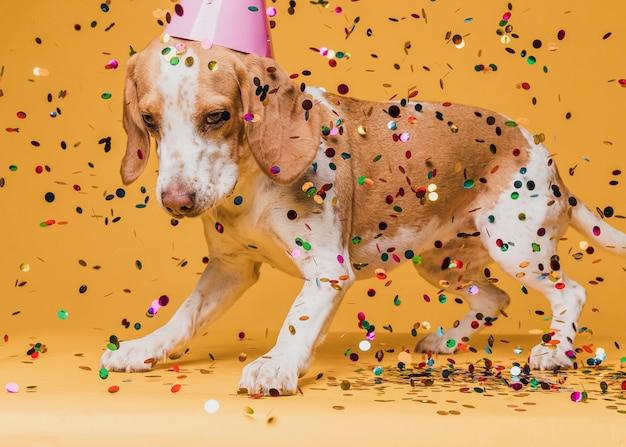 Cachorro fofo com chapéu de festa e confetes Foto gratuita