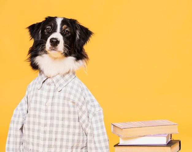 Cachorro fofo com uma fantasia Foto gratuita