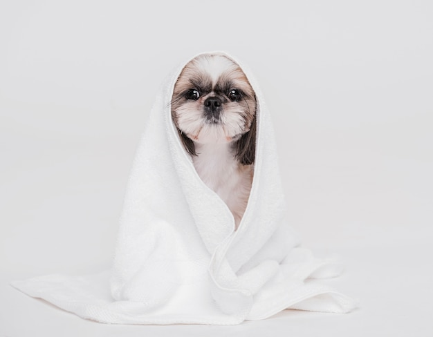 Cachorro fofo com uma toalha Foto Premium