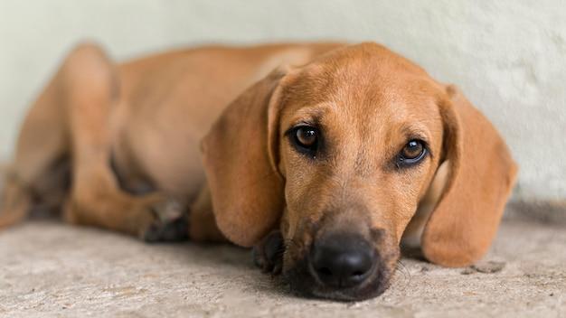 Cachorro fofo de resgate no abrigo esperando para ser adotado Foto gratuita