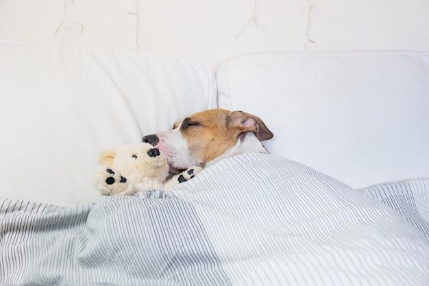 Cachorro Sonhando e Dormindo na cama com cobertor e bichinho de pelúcia