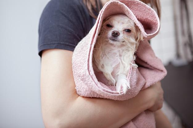 Cachorro fofo e feliz no salão de beleza Foto Premium