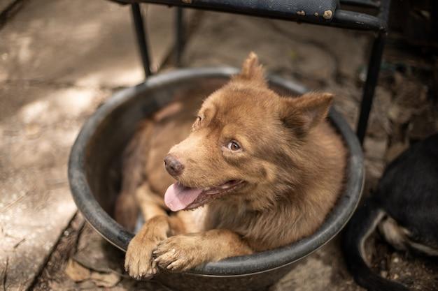 Cachorro marrom deitado no banho de água Foto Premium