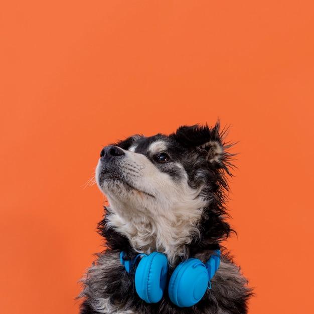 Cachorro olhando com fones de ouvido no pescoço Foto gratuita