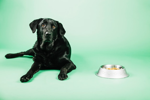 Cachorro perto de tigela com comida Foto gratuita
