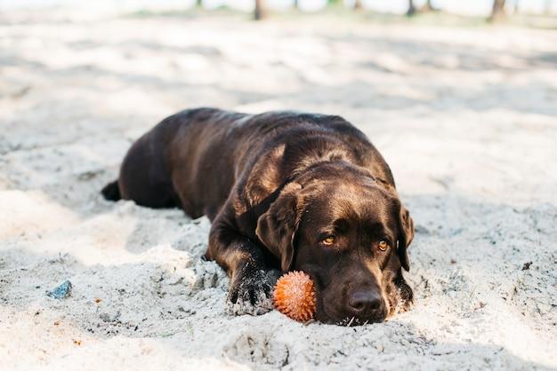 Cachorro relaxando na praia Foto gratuita