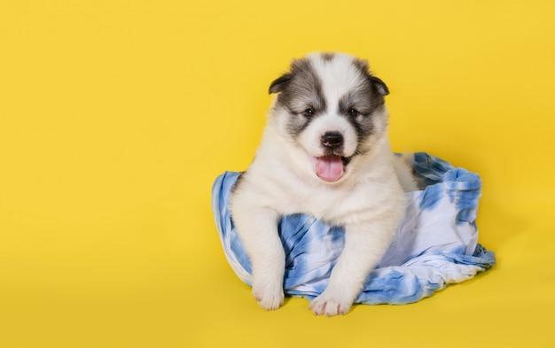 Cachorro sentado na cesta Foto Premium