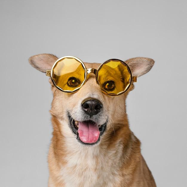 Cachorro sorridente fofo usando óculos escuros Foto gratuita