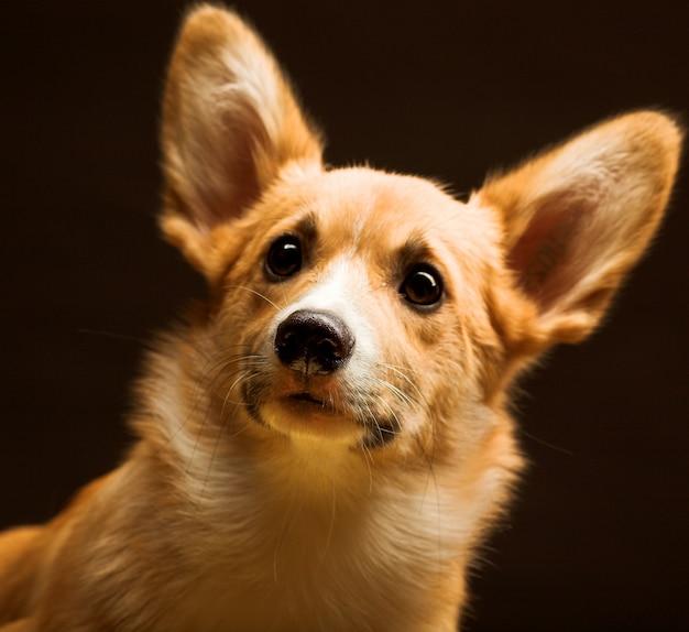 Cachorro Foto Premium