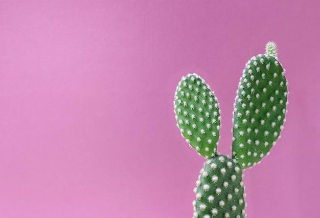 Cacto closeup em fundo rosa Foto Premium