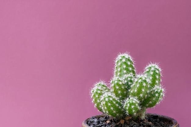 Cacto closeup em rosa Foto Premium