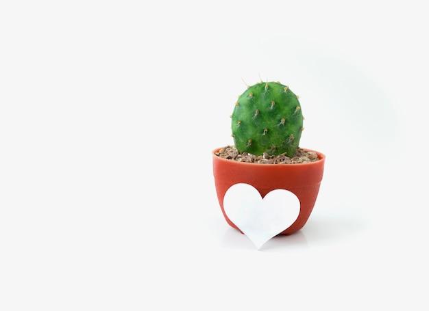 Cacto em pote de plástico com símbolo de coração em branco isolado no branco Foto Premium