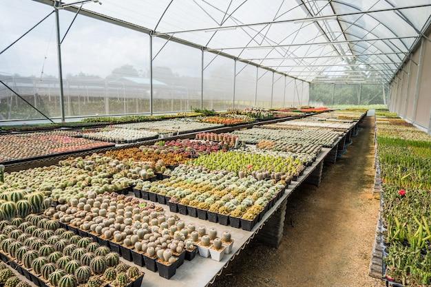 Cacto muitas variantes no pote para o plantio dispostas em linhas selecione e foco suave. Foto Premium