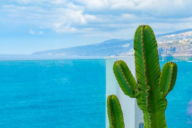 Cacto que cresce na varanda atrás dos trilhos de vidro sobre o oceano. mar com pequenas ondas no fundo Foto gratuita