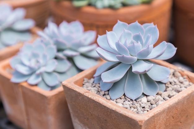 Cactos de suculentas no deserto jardim botânico para decoração e design de agricultura Foto Premium