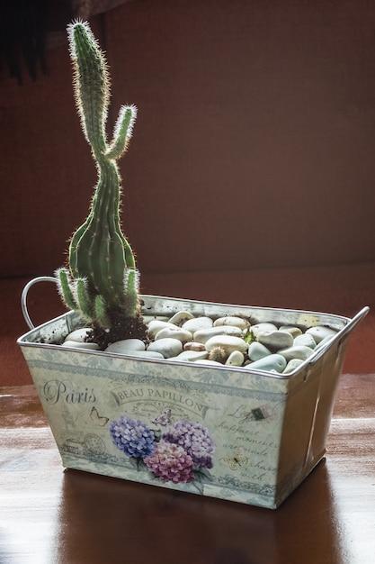 Cactus em pote de estanho com pedras decorativas Foto Premium