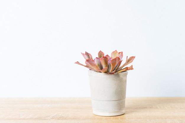 Cactus na decoração de vaso na mesa de madeira Foto Premium